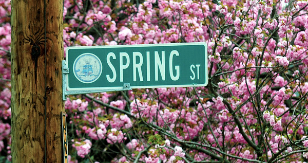 JIM VAIKNORAS/Staff photo The sign for Spring Street in Newburyport is surrounded by pink blossoms Friday moning.