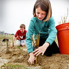 BRYAN EATON/Staff photo. Molin Upper Elementary School fourth grade students helped plant dune grass on Plum Island. Brian Lucy, 10, left, digs holes while Madeline Bell, 9, puts grass in after spreading a little fertilizer.
