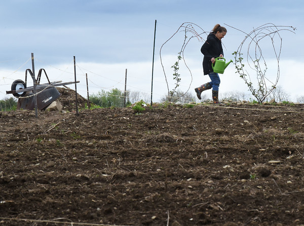 BRYAN EATON/Staff photo. A woman does some watering at Amesbury Community Garden at Battis Farm on Monday morning. The garden, which started over 20 years ago, is not only a place to grow food, but grow friendships as many people have the same plots year after year and make friendships.