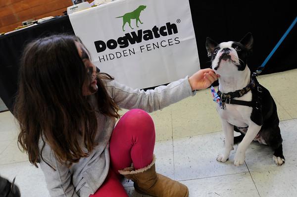 "TIM JEAN/Staff photo<br /> <br /> Kali Cuddy, 9, of Newburyport, meets ""Stanley"" a Boston Terrier during the Fido Fair at the Salvation Army in Newburyport.   5/12/18"