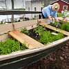 BRYAN EATON/Staff photo. This skiff was headed for the junk pile at Lowell's Boat Shop in Amesbury last summer until it was suggested it could be used as a nautical-themed planter. Tuesday volunteer Sandra Johnson of Newburyport put in some new plants to replace the ones that were set in last year.