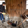 BRYAN EATON/Staff photo. Herrick fills the chicken feed, and volunteers help to collect the eggs.