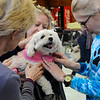 "TIM JEAN/Staff photo<br /> <br /> Stephanie Melanson, center, of Newmarket, holds her 13 year old dog ""Winnie"" while she is blessed by Wendy Davis, left, Associate Pastor and Mara Coleman, right, from the North Shore Bridge Church during the Fido Fair at the Salvation Army in Newburyport.   5/12/18"
