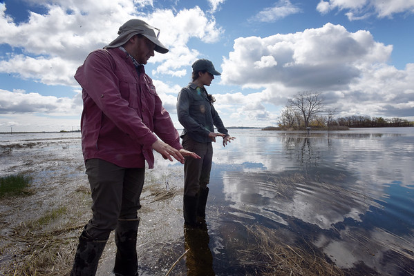 BRYAN EATON/Staff Photo. Justin Lesser, a Ph.D student, left, and Hillary Sullivan a research assistant with the Woods Hole Oceanographic Institute, show grasses that are submerged in a tributary to the Rowley River. The grasses can survive underwater for a length of time, but if the oceans rise, the amount of these grasses could dwindle as they do need time in the air.