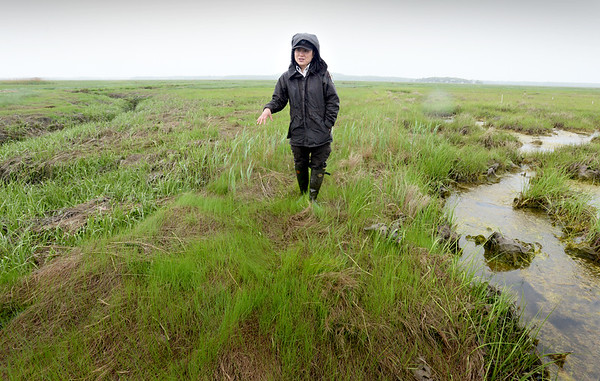 BRYAN EATON/Staff Photo. Nancy Pau from the Parker River National Wildlife Refuge, stands on a berm at the refuge. The berms kept standing water, at right, from draining out in creeks, one of which is on the left.