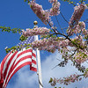 BRYAN EATON/Staff photo. The American flag waves above a flowering tree at Newburyport's Atkinson Common.
