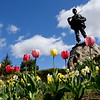BRYAN EATON/Staff photo. A bed of tulips and daffodills at Atkinson Common in Newburyport.