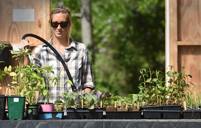 BRYAN EATON/Staff photo. Kailey Burke of Nourishing the North Shore waters seedlings in the greenhouse on Sunday morning at their West Newbury garden.