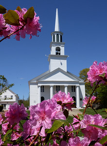 BRYAN EATON/Staff photo. The Main Street Congregational Church in Amesbury is framed by colorful PJM rhododendrons. Under Governor Baker's phasing in of openings, houses of worship now can hold services again.