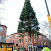 BRYAN EATON/Staff photo. The Christmas tree sponsored by the Greater Newburyport Chamber of Commerce and Industry was lowered into Newburyport's Market Square on Thursday morning. The tree will be decorated for the Newburyport Santa Parade and Tree Lighting on November 27 with Santa and Mrs. Claus arriving at the waterfront at 3:30 and the lighing at approximately at 4:00p.m.