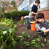BRYAN EATON/Staff photo. Boys and Girls Club counselor Coreen Pecoraro and some helpers worked to close down the garden for the season. Removing the last of the produce and putting dead plants and produce aside for composting are, from left, Liam McDermott, 6, Brayson Brown, 8, and Charlie Parada, 6.