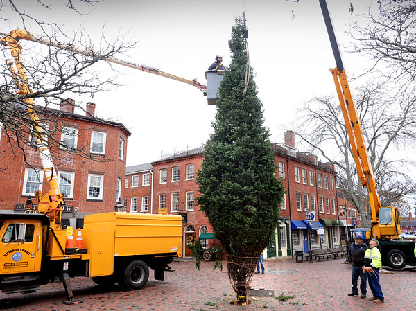 BRYAN EATON/Staff photo. This year's Christmas tree was lowered into place in Newburyport's Market Square with the Newburyport Department of Public Services securing it into place and taking off the twine. The tree will be lit at about 4:00pm on Sunday, November 26 after the Santa Parade, sponsored by the Rotary Club, starts at 3:30.