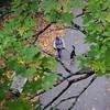 JIM VAIKNORAS/Staff photo <br /> A woman walks her dog on the Rail Trail in Newburyport Saturday morning.