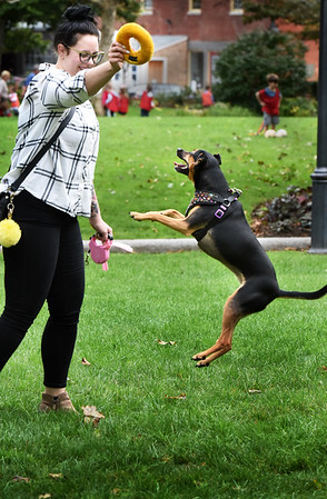 BRYAN EATON/Staff photo. Quinn jumps for a ring held by Cady Jones of Newburyport at Newburyport's Waterfront Park during some crisp autumn weather. She takes the three-year-old rescue dog out for some training and excercise before she goes to work in the afternoons.