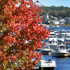 BRYAN EATON/Staff photo. Many  boats are still docked or moored in the Merrimack River as the nice weather continues into October, although some leaves are starting to turn color like this maple near Hatter's Point in Amesbury. Peak season for leaf peeper in the area is still about two weeks away.