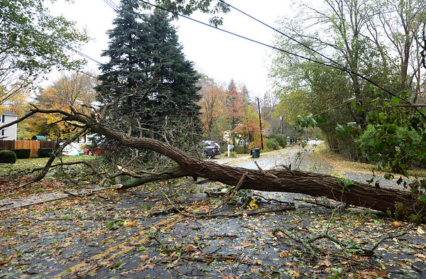 BRYAN EATON/Staff photo. This locust tree fell across Goss Avenue in Amesbury, one of many toppled during Monday morning's windy and rainy storm.
