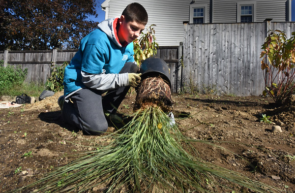 BRYAN EATON/Staff photo. River Valley Charter School student Drew MacDonald, 13, empties Morning Light Maiden Grass.