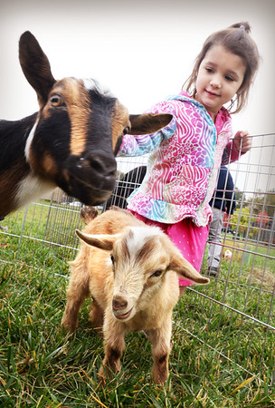 BRYAN EATON/Staff photo. Lola Eigen, 3, checks out a mother goat and its kid in a temporary pen at the Bresnahan School in Newburyport. The preschoolers are working on a thematic unit on Fall, Farm and Harvest this week and got to see up close goats, ducks, rabbits and a baby pig from Animal Craze.