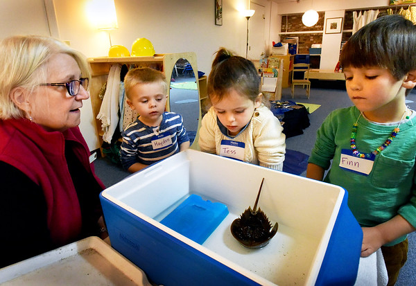 BRYAN EATON/Staff photo. Educators from the Joppa Flats Education Center came to the Newburyport Montessori School on Tuesday to teach youngsters about life in the Great Marsh. Here Carol Piper shows off a horseshoe crab, which righted itself after being turned over, to, from left, Hayden Zakowicz, Tess Barrett and Finn Lucas Nelson.