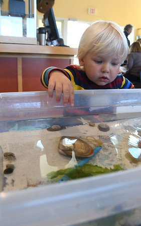 JIM VAIKNORAS/Staff photo Russell Leahy, 2, of plum Island checks out the touch tank at the Joppa Flats Education center Sunday afternoon.