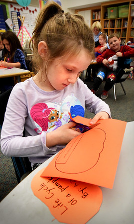 BRYAN EATON/Staff photo. Azayla Eaton, 5, cuts the outline of a pumpkin that she will be gluing a seed to in Jane Keeler's class at Salisbury Elementary as the kindergartners have been learning about the life cycles of the gourd. They are travelling to a Haverhill Farm at the end of the week to pick their own pumpkins where they'll be getting the seed. Pumpkins are special to her as her birthday is on Halloween.