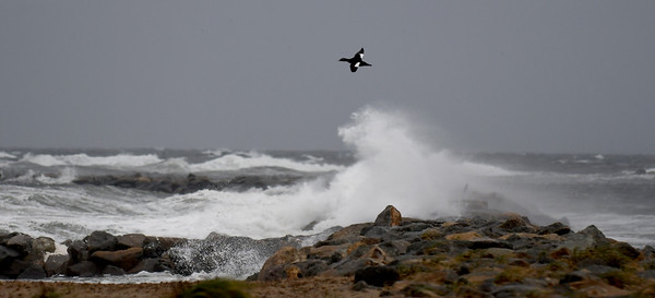 JIM VAIKNORAS/staff photo A sea bird flies by as waves pound the north jetty on Salisbury Beach Reservation Saturday morning. Winds , high surf and rain pounded the area through out the day.