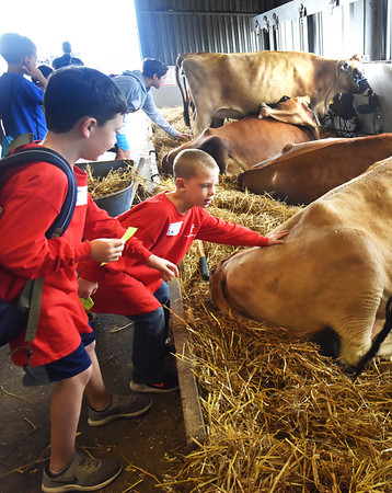 BRYAN EATON/Staff photo. Braden Bailey, 7, left, and Jackson Gadsby, 6, pet the cows at the Topsfield Fair recently. The first-graders from the Amesbury Elementary School have been taking a field trip there for 10 years.