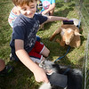 BRYAN EATON/Staff photo. Dexter Raimo, 5, grooms two goats at the Bresnahan School in a petting zoo of farm animals brought by Animal Craze. The pre-kindergartners at the Newburyport school were doing a unit on farm animals and this encounter gave them an up-close look and appreciation.
