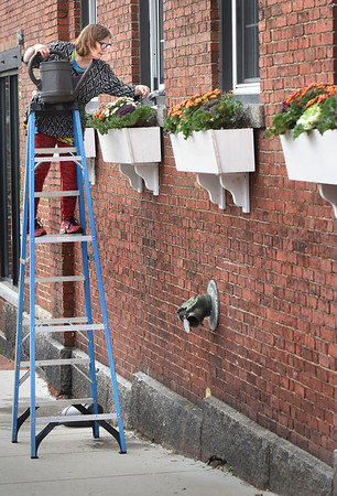 BRYAN EATON/Staff Photo. HIgh window boxes doesn't deter Maddy Campbell of Greenery Designs of Amesbury as she tends to a customer's fall floral arrangements on Tuesday on Water Street in Amesbury's Lower Millyard. Despite rain in the forecast, she waters every day along with picking out dead flowers and wipes down the boxes.