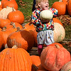 BRYAN EATON/Staff Photo. Brenna Coburn, 2, of Amesbury shows a white pumpkin she found in a pile of typical orange ones on the lawn of the Main Street Congregational Church in Amesbury late Tuesday morning. She and fellow two-year-olds were at Story Hour at Amesbury Public Library which held the weekly meeting amongst the gourds where they did leaf rubbings after the stories and then explored the piles of pumpkins which the church is selling for a fundraiser.