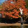 BRYAN EATON/Staff Photo. Several Canada geese swim the colors of this maple tree at the Frog Pond at the Bartlet Mall in Newburyport on Tuesday morning. Many colorful leaves may be disappearing as a rain storm is forecast Wednesday night into Thursday morning with some wind as well.