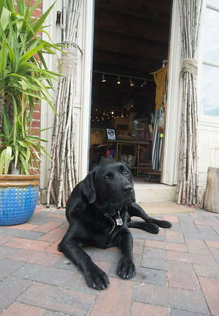 JIM VAIKNORAS/Staff photo Vader stands guard at the entrance to Vaalbara on Water Street in Newburyport Friday afternoon.