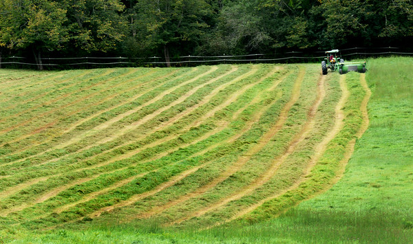 """BRYAN EATON/Staff photo. With the weather forecast to be dry, this field of hay was cut on Congress Street in Salisbury on Thursday morning. After some drying, a """"tedder"""" will swirl the hay around further before being gathered, then baled."""
