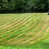"BRYAN EATON/Staff photo. With the weather forecast to be dry, this field of hay was cut on Congress Street in Salisbury on Thursday morning. After some drying, a ""tedder"" will swirl the hay around further before being gathered, then baled."