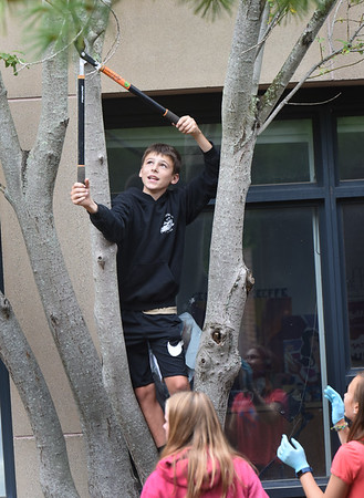 BRYAN EATON/Staff Photo. Michael Sanchez, 14, prunes the dead branches of the trees in the courtyard.