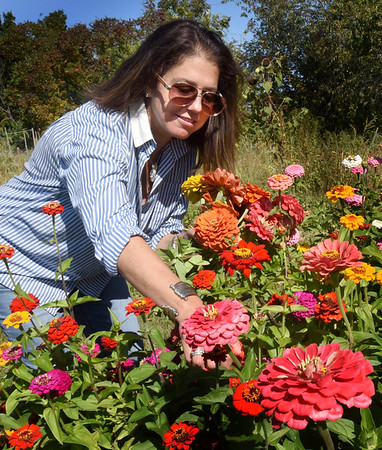 BRYAN EATON/Staff Photo. Dawn Pelletier of Amesbury was picking flowers at her neighbors Bruce and Bernadette Georgian's plot on Friday at the Amesbury Community Gardent to present to another friend for their birthday. Except for showers forecast for Saturday night, the weekend looks good for flower picking, apple picking or any other outdoor activity.