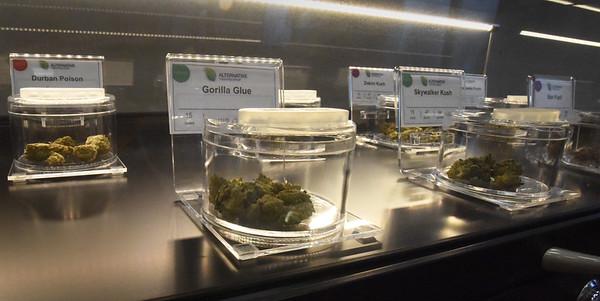 BRYAN EATON/Staff Photo. Marijuana samples on display.