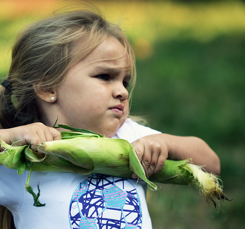BRYAN EATON/Staff photo. Avery Rack, 5, uses some muscle to rip the husk off an ear of corn to toss into the bucket.