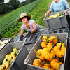 BRYAN EATON/Staff photo. Fall, or some would say Autumn, begins tomorrow and the produce that comes with it is appearing in local gardens and farms. Mariana Robles, an agricultural exchange student from Columbia, left, and Donna Bartlett of Bartlett's Farm in Salisbury load a truck with mini-pumpkins and decorative gourds for the farm's stand.