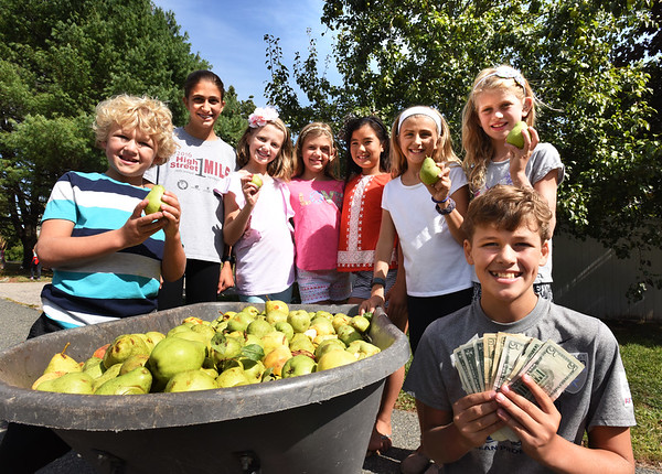 "BRYAN EATON/Staff photo. Friends and siblings in the ""Squires Glen Neighborhood"" which is off Hale Street in Newburyport, gathered Bartlett pears from the bountiful tree behind them to sell and raise money for victims of Tropical Storm Harvey. Still deciding which venue to send the $200 raised, are, from left, William Cotter, 8, Hailey LaRosa, 12, Madeline Bell, 10,  Charlotte Cotter, 10, Avery Tahnk, 10, Maya LaRosa, 10, Emma McIsaac, 10, and Ben Cotter, 12."