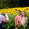 BRYAN EATON/Staff photo. The sunflower display on the field adjacent to Colby Farm on Scotland Road in Newbury has attracted people once again for the colorful display, which started with 150,000 seeds planted. Shel Tscherne of Marlborough and her daughters, Emma, 9, right, and Grace, 11, visited on Thursday afternoon.