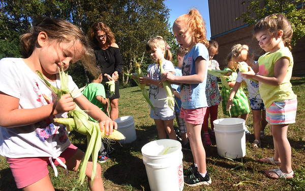 BRYAN EATON/Staff photo. More hands, albeit small ones, helped to quicken the shucking of five bushels of corn at the Bresnahan School.
