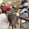 BRYAN EATON/Staff photo. Courtney Breen of Seacoast Labradors, shown with Cedar, and other counselors and therapy dogs were on hand at Amesbury High School for students going through grief.