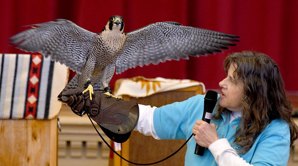 JIM VAIKNORAS/Staff photo Mary-Beth Kaeser of Horizon Wings holds Athena, a Peregrine Falcon, at a Eagle Festival event at Newburyport City Hall Saturday. The annual event featured  live bird show, crafts, and guided eagle viewing, at multiple locations.