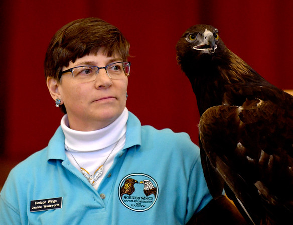 JIM VAIKNORAS/Staff photo Jeanne Wadsworth of Horizon Wings holds Chrysos, a golden eagle at a Eagle Festival event at Newburyport City Hall Saturday. The annual event featured  live bird show, crafts, and guided eagle viewing, at multiple locations.
