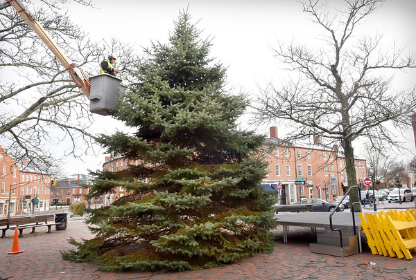 BRYAN EATON/Staff photo. Lance Ricard of the Newburyport DPS strings the lights on the Christmas Tree that was set up in Market Squares on Wednesday morning. The tree will be lit this Sunday around 4:00 p.m. after the Rotary Club sponsored Santa Parade which starts half an hour earlier.