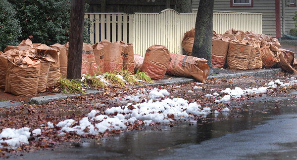 BRYAN EATON/Staff photo. Bags filled with leaves sit along the curb on Federal Street in Newburyport, yet to be picked up.