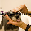 Rowley: Mandy, a schnauzer, gets a blueberry facial scrub at Bark Plaza in Rowley. Photo by Ben Laing/Staff Photo