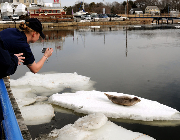 Salisbury:<br /> U.S. Coast Guard Seaman Tatiane Meshoyrer photographs a young harbor seal situated on an ice floe near the Fishtale Diner near Ring's Island in Salisbury. Several people were concerned the mammal may be injured and called the Coast Guard to investigate. <br /> Photo by Bryan Eaton/Newburyport Daily News Wednesday, February 25, 2009<br /> , Salisbury:<br /> U.S. Coast Guard Seaman Tatiane Meshoyrer photographs a young harbor seal situated on an ice floe near the Fishtale Diner near Ring's Island in Salisbury. Several people were concerned the mammal may be injured and called the Coast Guard to investigate. <br /> Photo by Bryan Eaton/Newburyport Daily News Wednesday, February 25, 2009