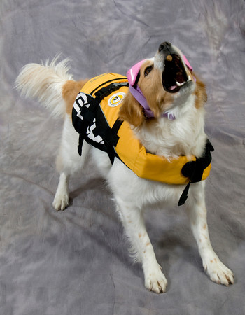 Sandy catches a treat as she models a Ezy Dog life vest, which is perfect for her active life style. The vest Retails for $45.99.